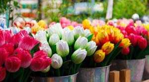 le marche aux fleurs amsterdam