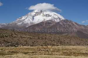 Parc-national-Sajama